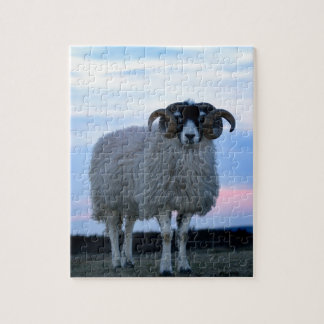 Sheep Puzzle/Jigsaw with Tin Jigsaw Puzzle