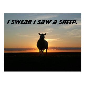 Sheep Sighting at Sunset Postcard