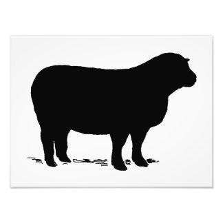 Sheep silhouette photo