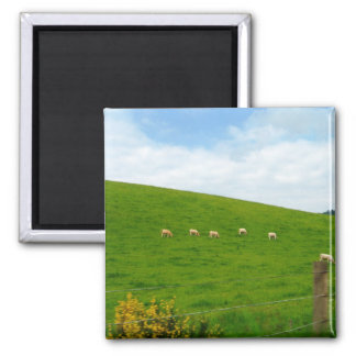 SHEEP! SQUARE MAGNET