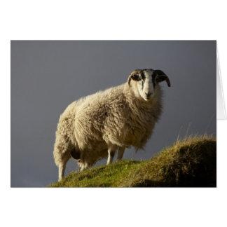 Sheep, Trotternish Peninsula, Isle of Skye, Card