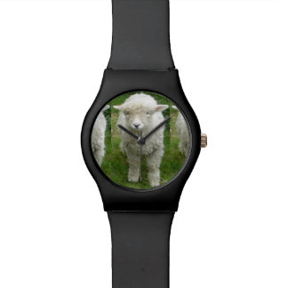 SHEEP WATCH