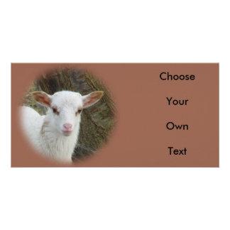Sheep - White Lamb Photo Card