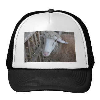 Sheep with hay cap