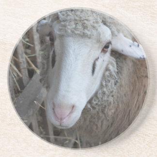 Sheep with hay coaster