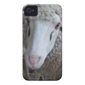 Sheep with hay iPhone 4 Case-Mate cases