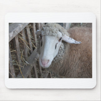 Sheep with hay mouse pad