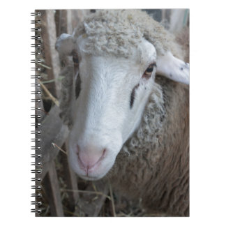 Sheep with hay notebooks