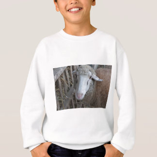 Sheep with hay sweatshirt