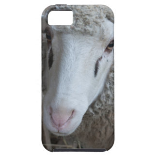 Sheep with hay tough iPhone 5 case