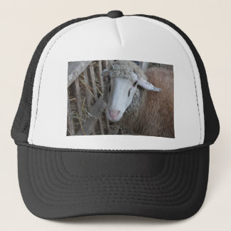 Sheep with hay trucker hat