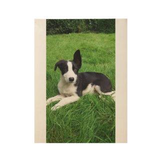 Sheepdog Puppy Wood Poster