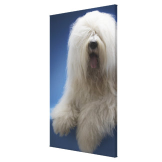 Sheepdog Stretched Canvas Print