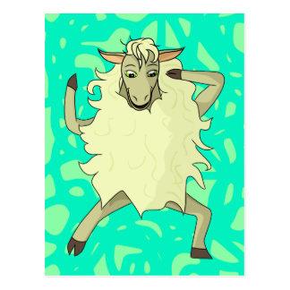 Shelby Sheep Postcard