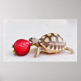 Sheldon & the Strawberry Poster