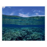 Shelf of coral print