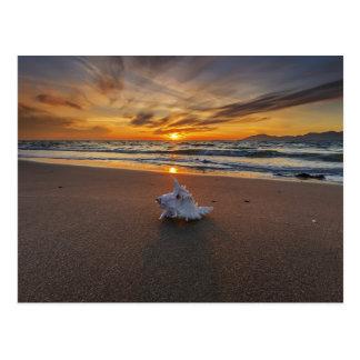 Shell At The Beach At Sunset | Kos Island Postcard