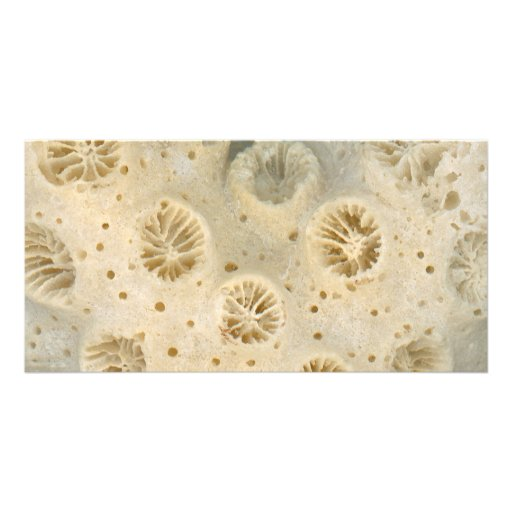 Shell - Conchology - Coral Customized Photo Card