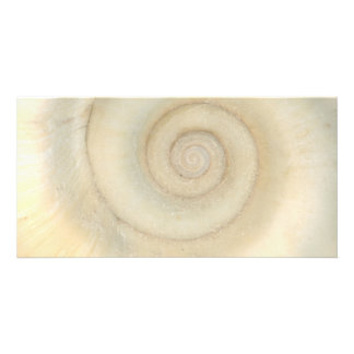 Shell - Conchology - White Spiral Personalized Photo Card