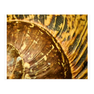 Shell Pattern Postcard