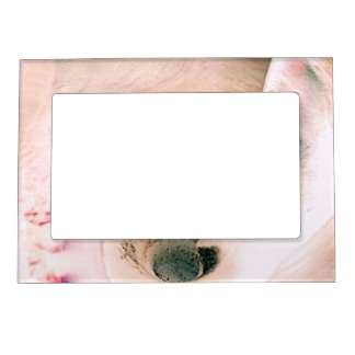 Shell Portrait Magnetic Picture Frame