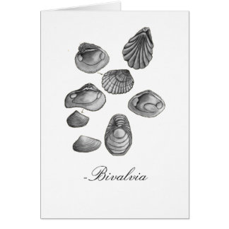 Shell Sketch Greeting Card