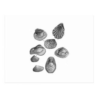 Shell sketch postcard