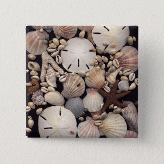 Shells 15 Cm Square Badge