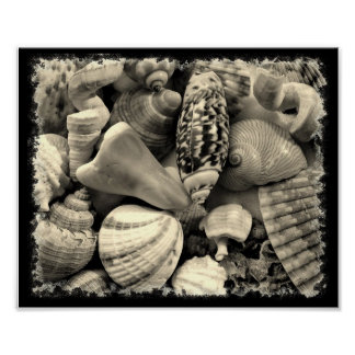 Shells in Black and White Poster