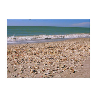 Shells On The Beach - Sanibel Captiva Canvas Print