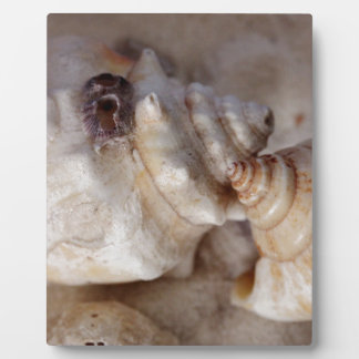 Shells Plaque