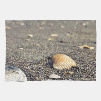 shells, shells, shells tea towel