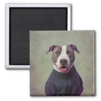 Shelter Pets Project - Major Good Boy Magnet