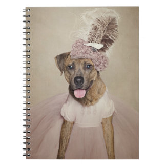 Shelter Pets Project - Tigger Notebook