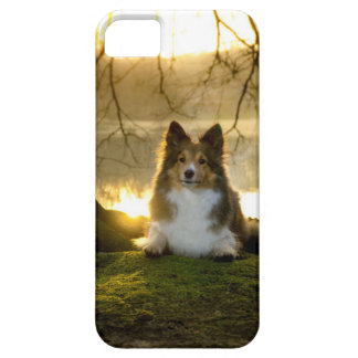 sheltie case for the iPhone 5