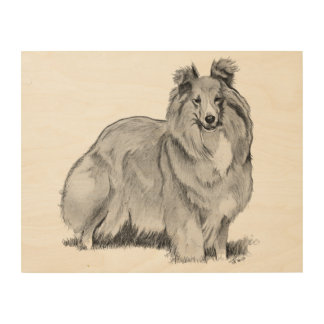 Sheltie Drawing Wood Print