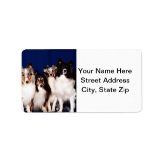 Sheltie Group Label