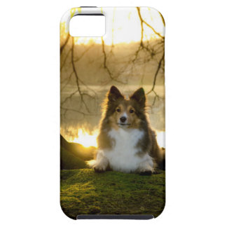 sheltie iPhone 5 cover