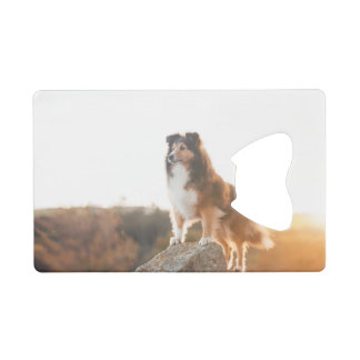 Sheltie on Cliff protecting heard during sunset