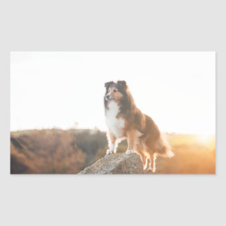 Sheltie on Cliff protecting heard during sunset Rectangular Sticker