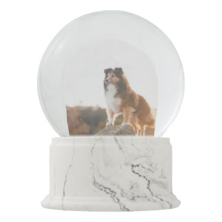 Sheltie on Cliff protecting heard during sunset Snow Globe