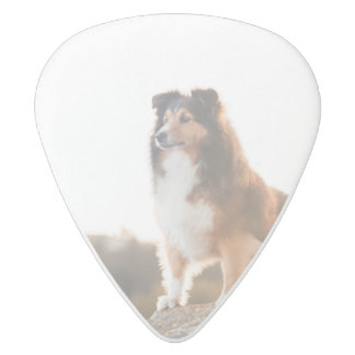 Sheltie on Cliff protecting heard during sunset White Delrin Guitar Pick