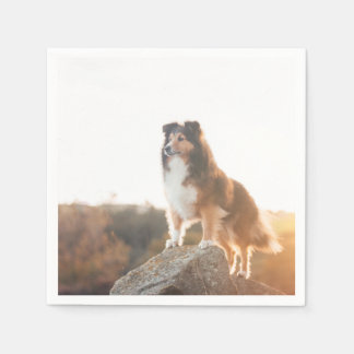 Sheltie on Cliff protectng heard during sunset Disposable Napkins