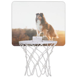 Sheltie on Cliff protectng heard during sunset Mini Basketball Hoop