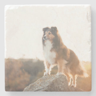 Sheltie on Cliff protectng heard during sunset Stone Coaster