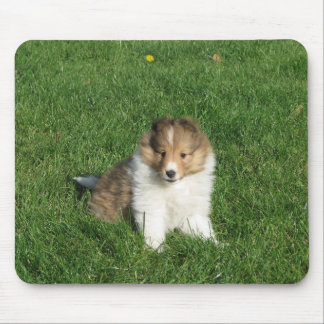 Sheltie puppy in grass mousepad