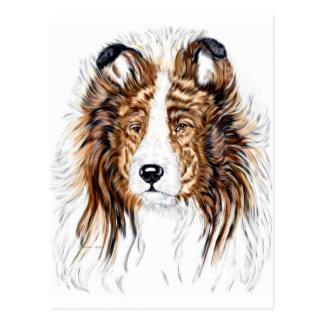 Sheltie Shetland Sheepdog Bust Postcard