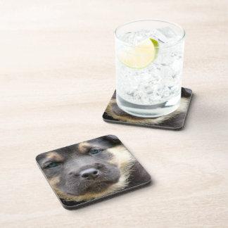 Shep Dog Coasters