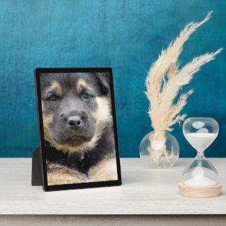 Shep Dog Plaques