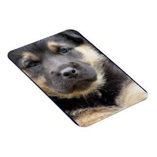 Shep Dog Rectangular Magnets